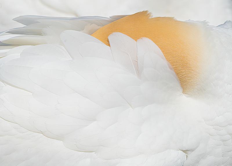 The Whiteness of A Gannett