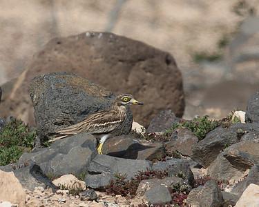 17.3.2014 Fuerteventura, Spain