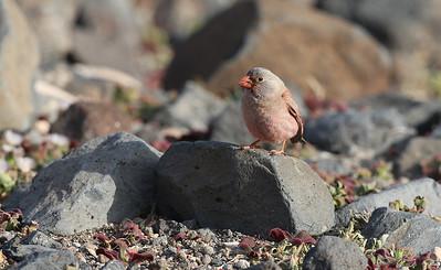 19.3.2014 Fuerteventura, Spain