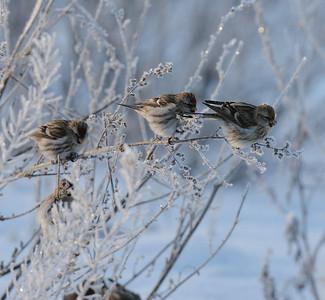 8.1.2012, Vantaa, Finland