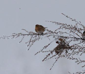 16.1.2010 Vantaa , Finland