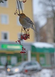 4.12.2012 Helsinki, Finland
