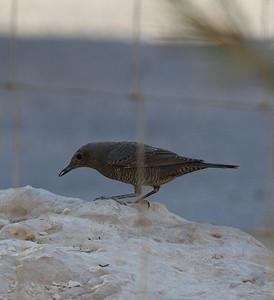 30.11.2010 Ein Avdat (Negev), Israel
