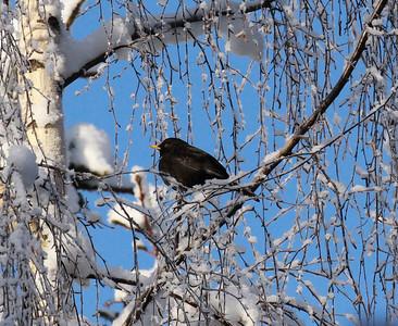 23.1.2010, Espoo, Finland