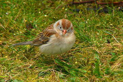 sparrow portraits