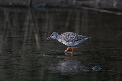 Redshank, Suffolk