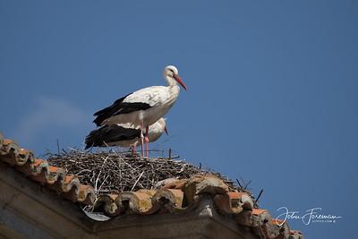 White Storks, Villacastín
