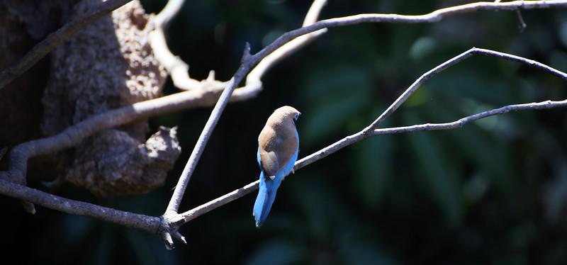 IMG_8820 San Diego Zoo Bird 5.6.2018.jpg