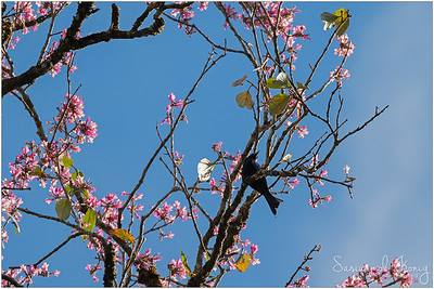 On top of blossoming tree
