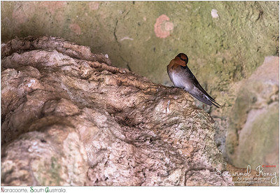 Welcome Sparrow, in a cave