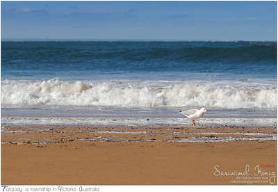 Seabirds can't be scared of big waves, can they? :)
