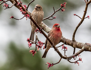Mr & Mrs House FInch
