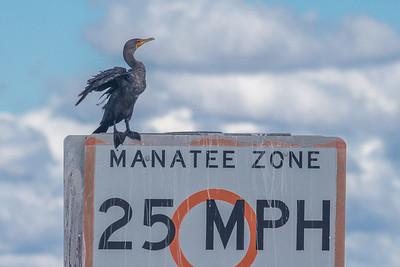 Cormorant Zone