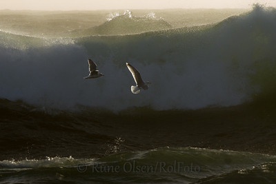 Over bølgene de grønne
