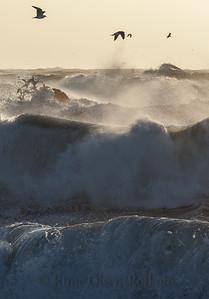 Måkesiluetter og uværsbølger