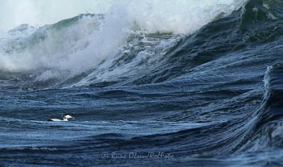 I bølgenes favn