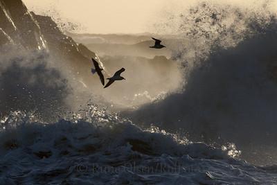 Mellom bølger og fjell