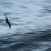 Sjørøver under radaren