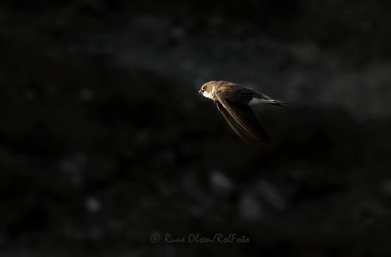 Sandsvale i lys og mørke