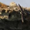 Mesterflygeren ved sandtaket