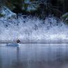 Laksandhunn en frostmorgen ved skogstjernet