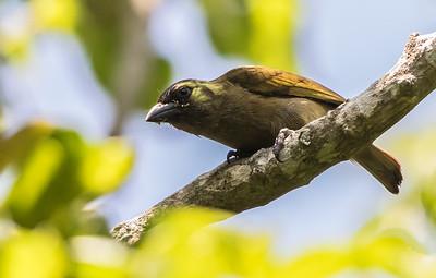 Bird Families/Species