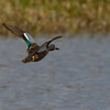 Birding in South Glenmore, new Sigma lens