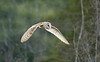 Barn Owl. Everglades National Park.<br /> <br /> © Martin Radigan. All images copyright protected.