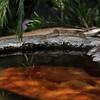 Tata lezard warming up near a pond