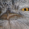 Frogmouth look