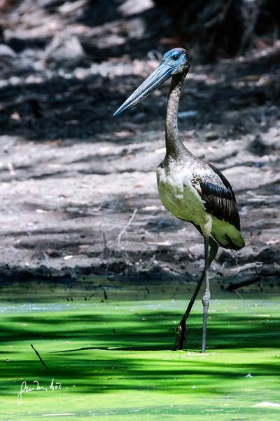 western australia outback landscape & wildlife