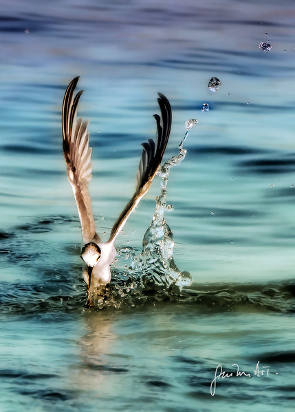 water droplets & bird