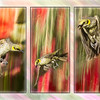 Honey-eater trio