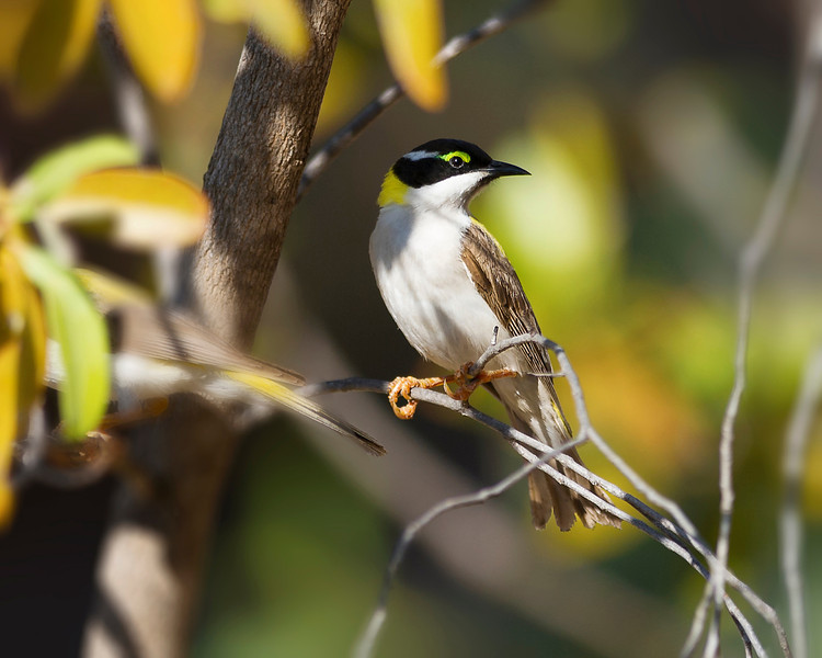 kimberley western australia birds