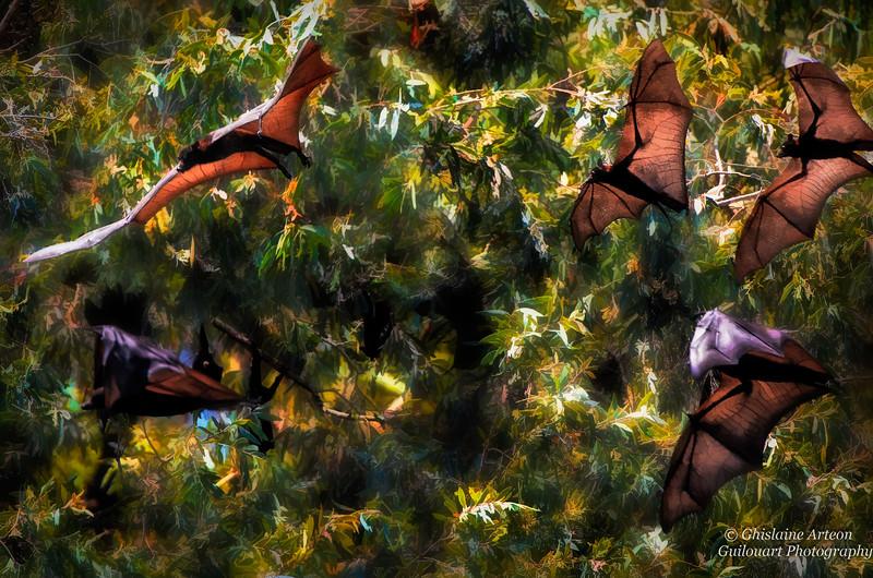flight of Bats
