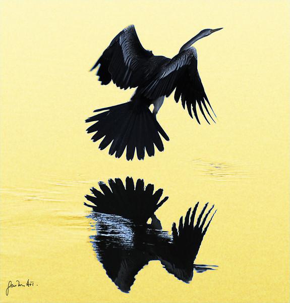 Long Neck Cormoran reflection