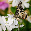 ever beautiful butterfly on flowers