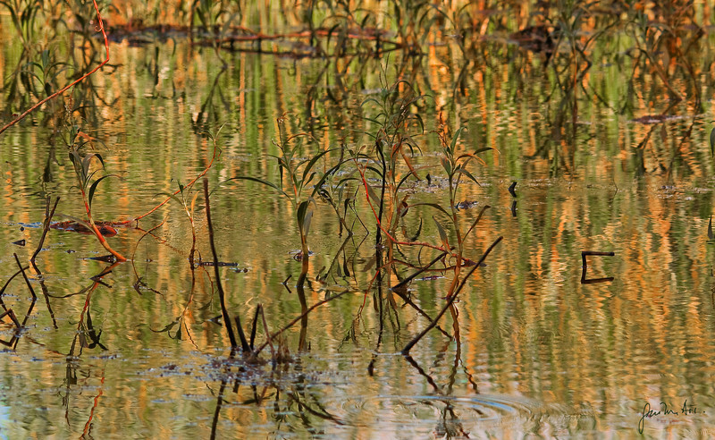 Reeds reflection-052010_5589-00105