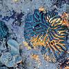 seashore-70-2010-00101