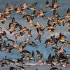 Mixed Flock At Dawn