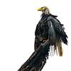 Soggy Eagle