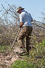 Greg Simmons clears out weeds around trees near the tractor shed.<br><em>Photo credit:  Diane Nunley</em>