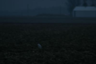 Snowy Owl, Jasper County - northeast of Wheatfield, Indiana.  January 10, 2006.