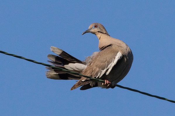 My Recent Bird Photo's