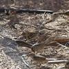 Sparrows -- GCSP, HASP, WCSP, HOSP