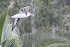 Who thought an albatross would be landing in a cloud forest?