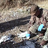 Snow Goose Field Dressing and Packaging