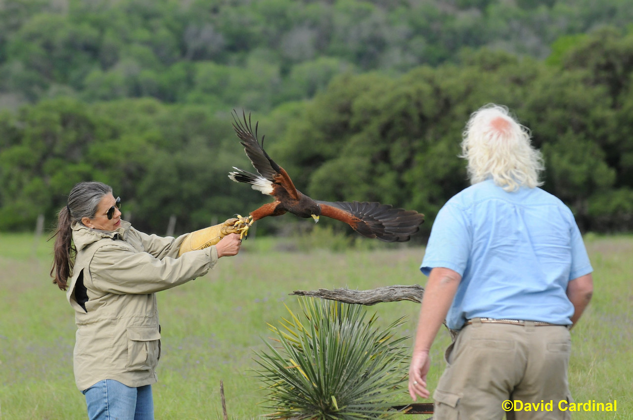 South Texas Birds Last Chance Forever Raptors