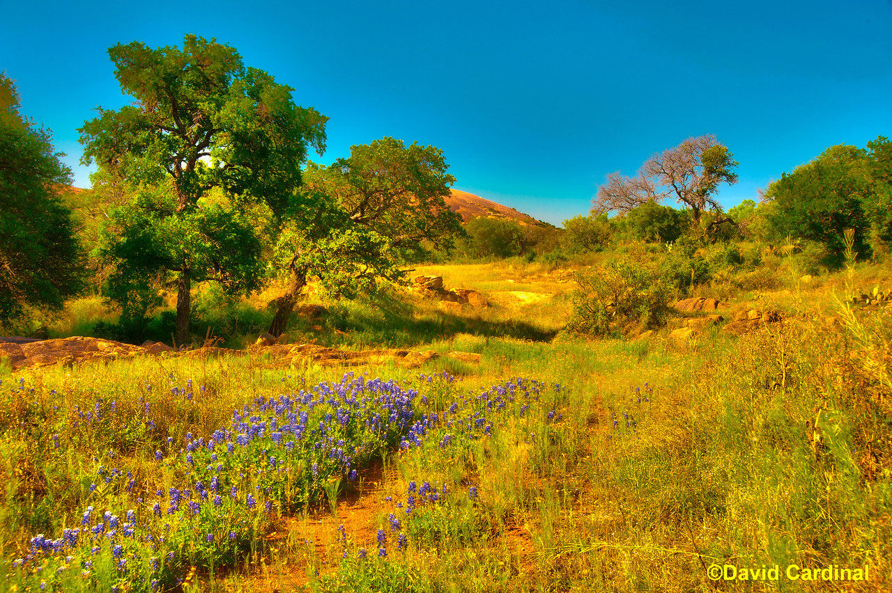 South Texas Birds & Enchanted Rock Landscapes