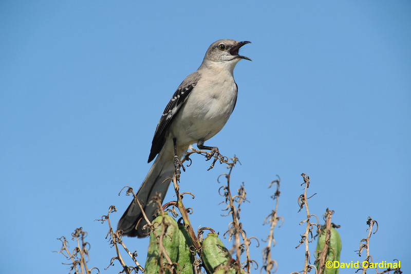 South Texas Birds
